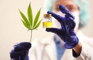 Proyecto de ley nuevo para el cannabis